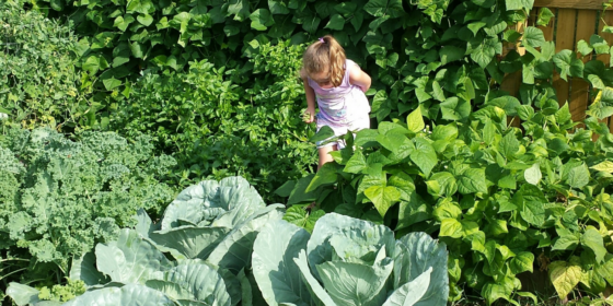 Equitable Food Access Through Farm to Early Care and Education in Wisconsin