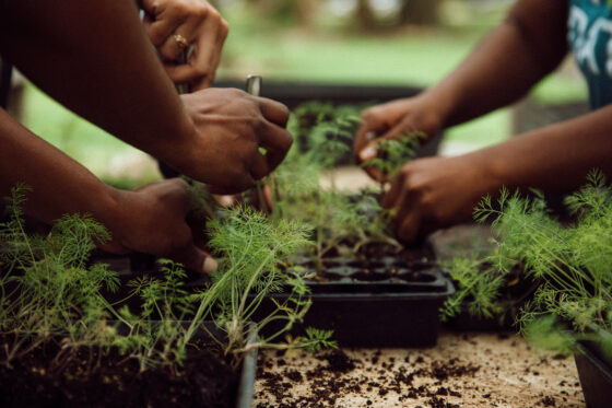 Farm to early care and education: Lessons from the COVID-19 experience